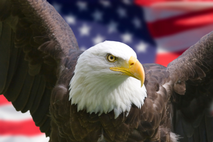 7 For Getting The Best Life Insurance Rate Picture Of An American Eagle